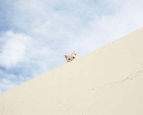 Mischief「Cat peering over wall!」:スマホ壁紙(9)