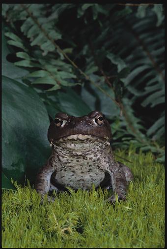 Frond「Colorado River Toad」:スマホ壁紙(18)