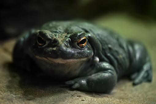 Ugliness「colorado river toad」:スマホ壁紙(18)