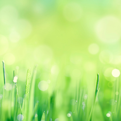 Wheatgrass「Wonderful morning」:スマホ壁紙(11)