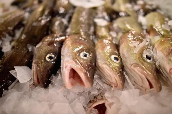 Fish「Cod's Back On The Menu At The Peterhead Fish Market」:写真・画像(12)[壁紙.com]