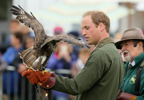 Animals Hunting「Prince William, Duke Of Cambridge Visits The Anglesey Show」:写真・画像(8)[壁紙.com]