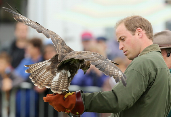 Animals Hunting「Prince William, Duke Of Cambridge Visits The Anglesey Show」:写真・画像(19)[壁紙.com]