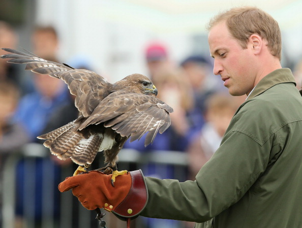 Animals Hunting「Prince William, Duke Of Cambridge Visits The Anglesey Show」:写真・画像(1)[壁紙.com]