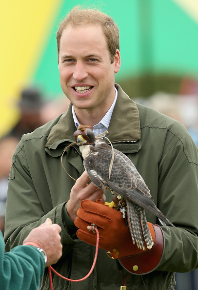 Animals Hunting「Prince William, Duke Of Cambridge Visits The Anglesey Show」:写真・画像(15)[壁紙.com]