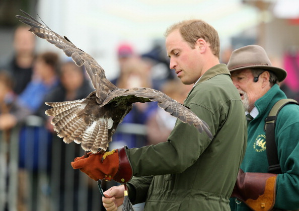 Animals Hunting「Prince William, Duke Of Cambridge Visits The Anglesey Show」:写真・画像(13)[壁紙.com]