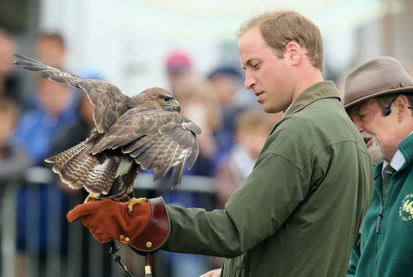 Animals Hunting「Prince William, Duke Of Cambridge Visits The Anglesey Show」:写真・画像(14)[壁紙.com]