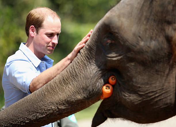 The Duke Of Cambridge Visits China - Day 4:ニュース(壁紙.com)
