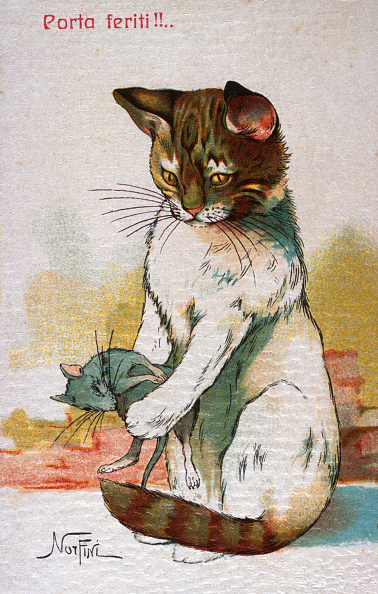 子猫「Like A Cat With The Mouse」:写真・画像(9)[壁紙.com]