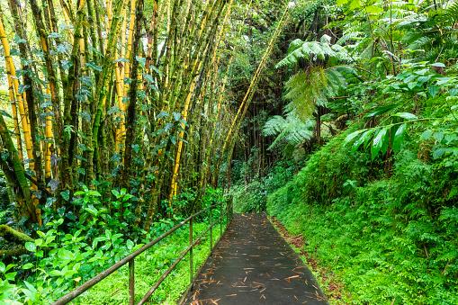 Akaka Falls「USA, Hawaii, Big Island, Akaka Falls State Park, bamboo forest」:スマホ壁紙(10)