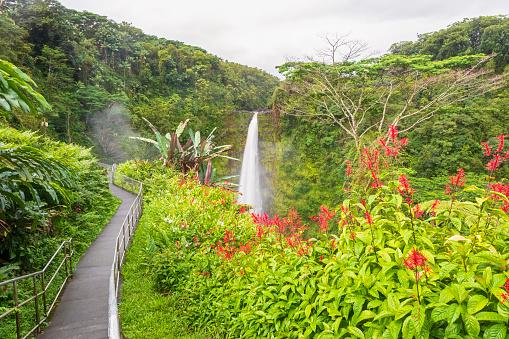 Akaka Falls「USA, Hawaii, Big Island, Akaka Falls State Park, Akaka Falls and Kolekole Stream」:スマホ壁紙(0)