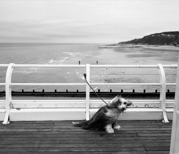 Waiting「Windswept Dog」:写真・画像(7)[壁紙.com]