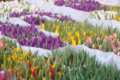 Amsterdam「Tulips for sale in the Amsterdam flower market」:スマホ壁紙(1)