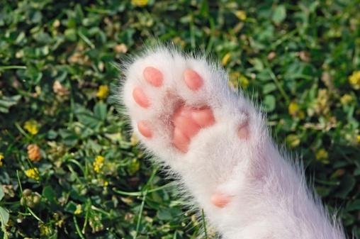 Kitten「Kitten paw」:スマホ壁紙(19)