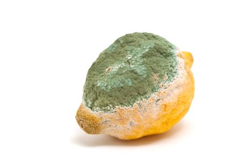 Rotting「moldy lemon」:スマホ壁紙(15)