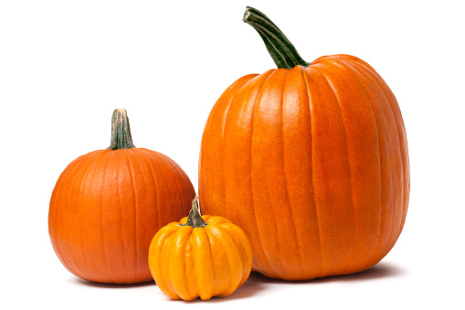 Pumpkin「Pumpkins isolated on white with clipping path」:スマホ壁紙(19)