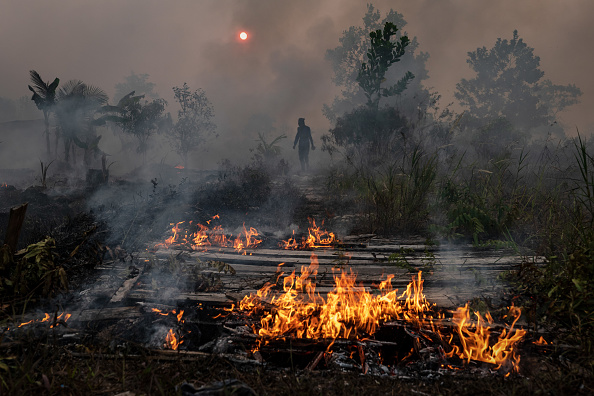Bestpix「Forest Fires Rages In Indonesia」:写真・画像(8)[壁紙.com]