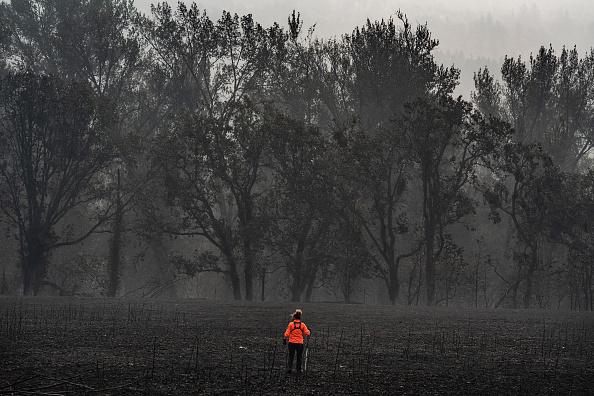 Topix「Almeda Fire Burns Through Southwestern Oregon」:写真・画像(13)[壁紙.com]