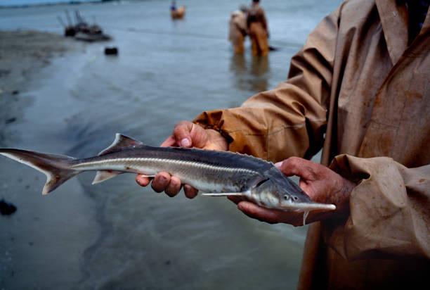 Healthy Eating「Fishing For Sturgeon」:写真・画像(5)[壁紙.com]
