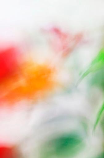 Defocus「Hibiscus flower blurred」:スマホ壁紙(7)