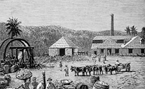 Sugar Cane「Sugar Mills」:写真・画像(18)[壁紙.com]