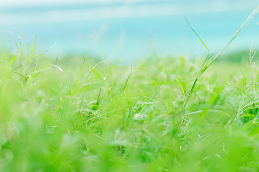 Focus On Background「Grass and sea」:スマホ壁紙(12)
