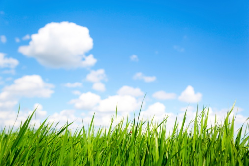 イースター「芝生と空の XXXL」:スマホ壁紙(5)