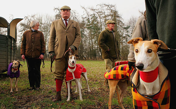 Locals Compete Dogs During Hare Coursing Event In Swaffham:ニュース(壁紙.com)