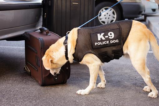 Emergency Services Occupation「Police Dog」:スマホ壁紙(19)