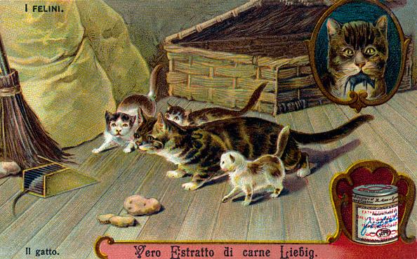 子猫「The Cat Family: Cat  - illustration」:写真・画像(12)[壁紙.com]