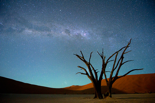 Namib-Naukluft National Park「Milky Way over Dead Acacia Tree. Dead Vlei,Soussvlei,Namibia」:スマホ壁紙(19)