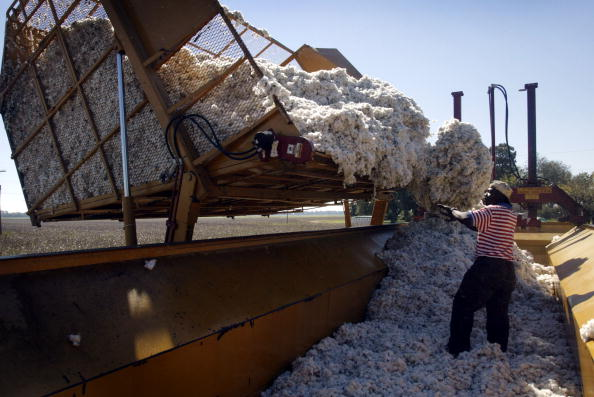 Cotton「Cotton Harvest」:写真・画像(10)[壁紙.com]