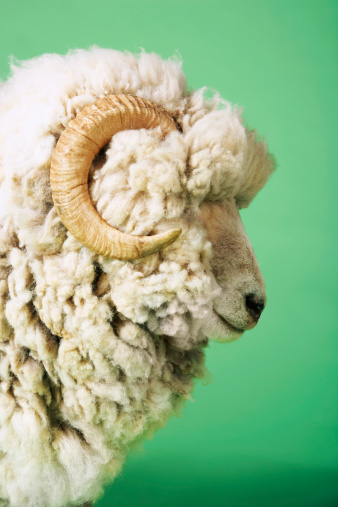Horned「White Sheep's Head」:スマホ壁紙(11)