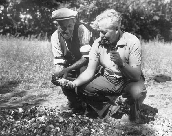 Light Bulb「Harold Wilson」:写真・画像(14)[壁紙.com]