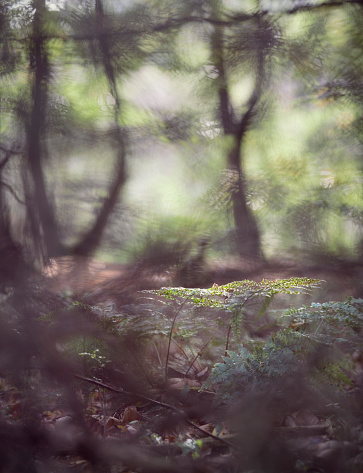 North Brabant「Fern plant catching morning sunlight in a forest」:スマホ壁紙(13)
