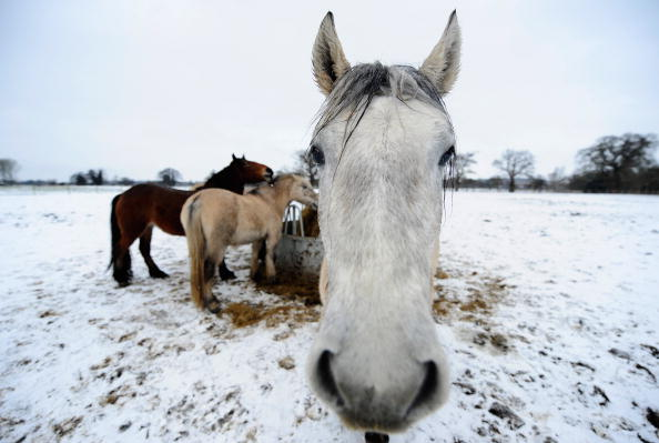 animal「Freezing Temperatures Continue To Grip The Country」:写真・画像(10)[壁紙.com]