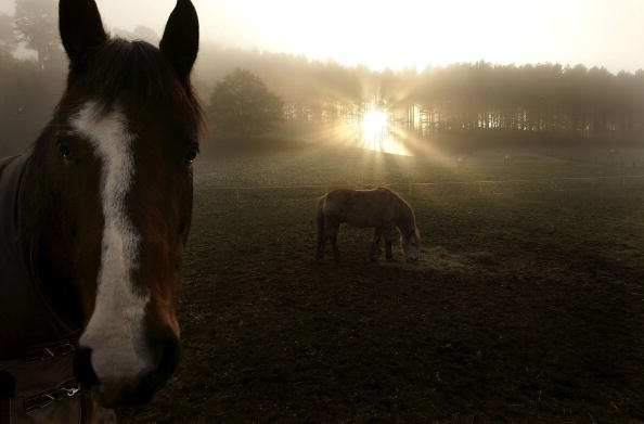 Fog「Fog Shrouds Rural England As Cold Snap Continues」:写真・画像(19)[壁紙.com]