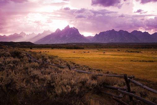 Horse「Horses graze at Sunset on the Tetons」:スマホ壁紙(7)