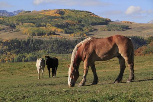 アンコンパグレ国有林「Horses grazing, autumn」:スマホ壁紙(15)