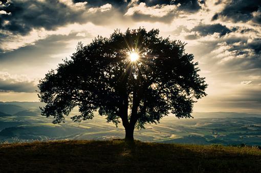 Single Tree「Tuscany landscape」:スマホ壁紙(15)