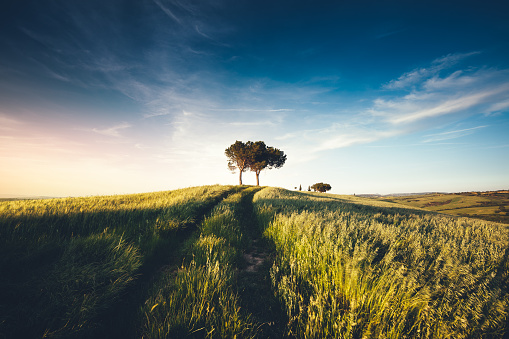 Agricultural Field「Tuscany Landscape At Sunset」:スマホ壁紙(12)