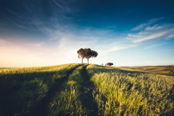 Tuscany Landscape At Sunset:スマホ壁紙(壁紙.com)