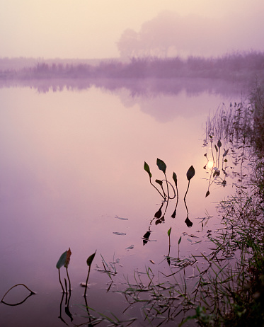North Brabant「Magical sunrise at lake in the south of the Netherlands」:スマホ壁紙(4)