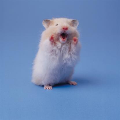Hamster「Hamster」:スマホ壁紙(17)