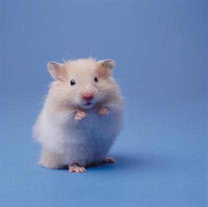 Hamster「Hamster」:スマホ壁紙(3)