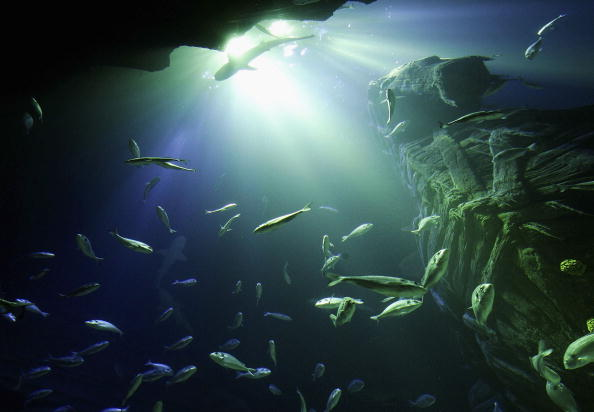 Underwater「Sea Life Aquarium Presstour」:写真・画像(3)[壁紙.com]