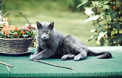 ビルマネコ「グラファイトの猫」:スマホ壁紙(4)