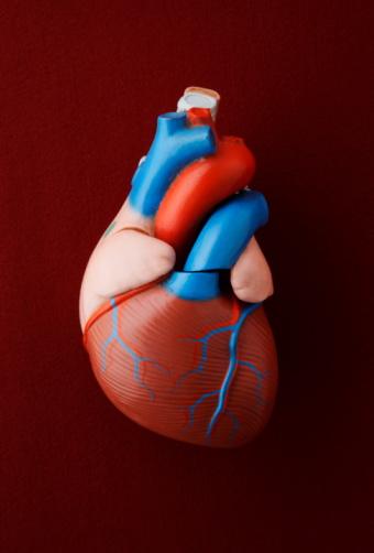 Fitness model「Antique medical model of a heart」:スマホ壁紙(2)