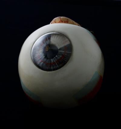 Eyesight「Antique medical model of an eyeball,close up」:スマホ壁紙(12)