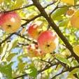 素朴で美しい果樹園の画像まとめ:まとめ
